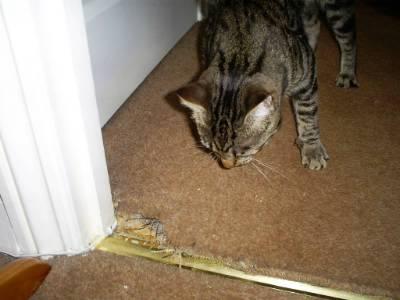 Carpet repair pet damage.