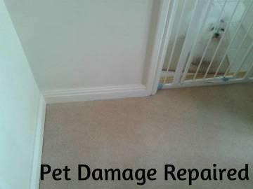 Examples of Carpet Repairs